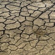 Gevolgen van droogte op grondwaterstanden_Geofoxx