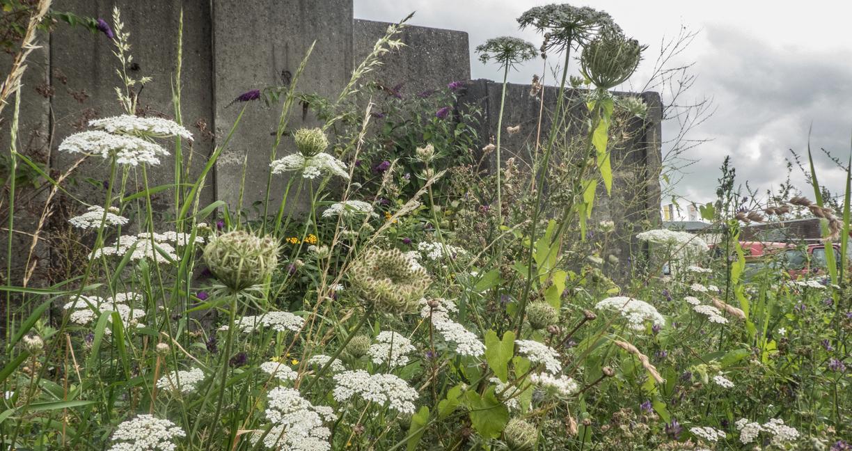 Plantenkracht-GOUDasfalt-bloemen_Geofoxx